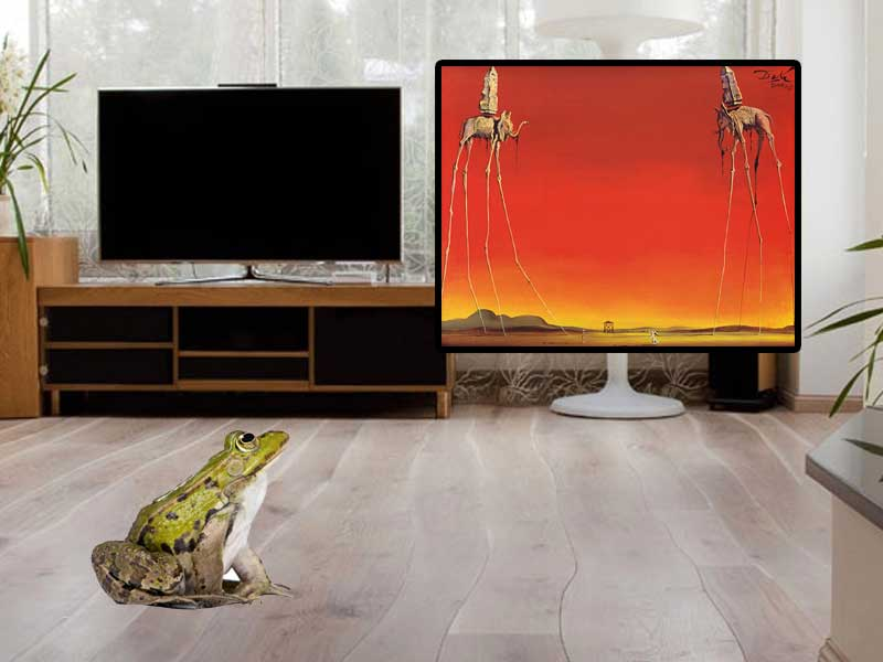Frog in living room (updated)