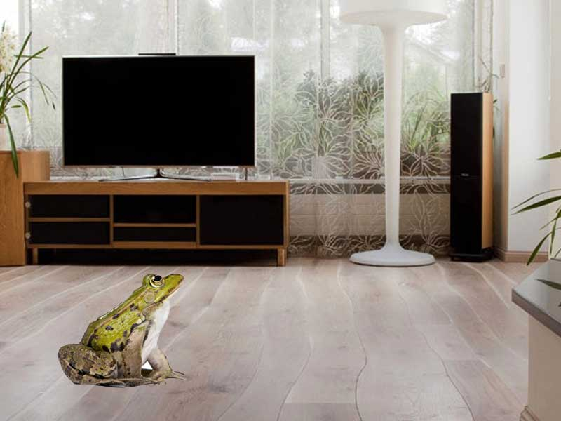 FROG IN LIVING ROOM